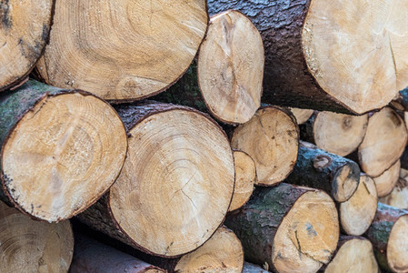 Wood cutted