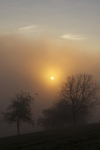 fog and sun 2
