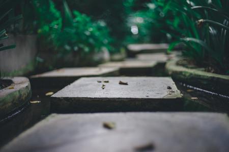 Tropical Footpath