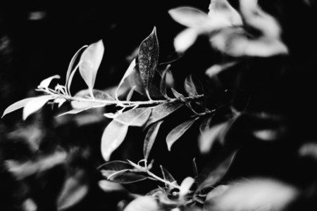 Black  White Botanicals