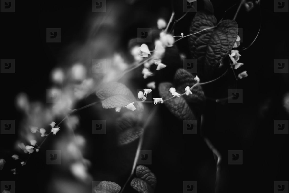 Black   White Botanicals