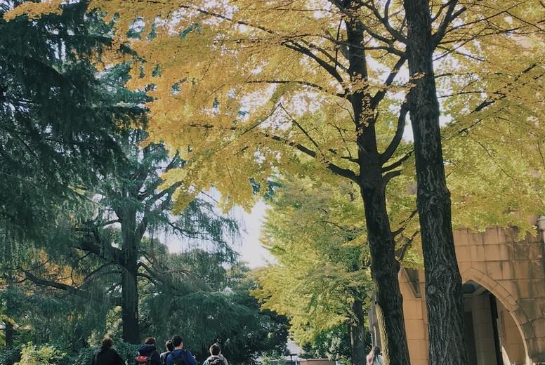 Autumn Color  Japan