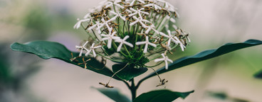 Garden Botanical