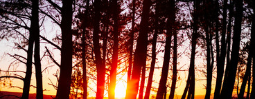 sunset on the trees