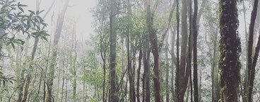 Standing in a forest