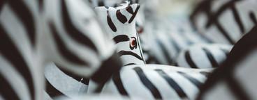 Thai Zebra Shrine 5
