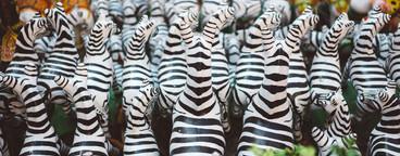 Thai Zebra Shrine