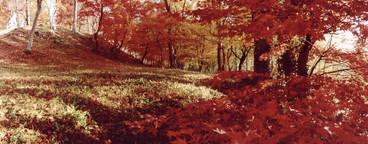 Nature Experiences  03