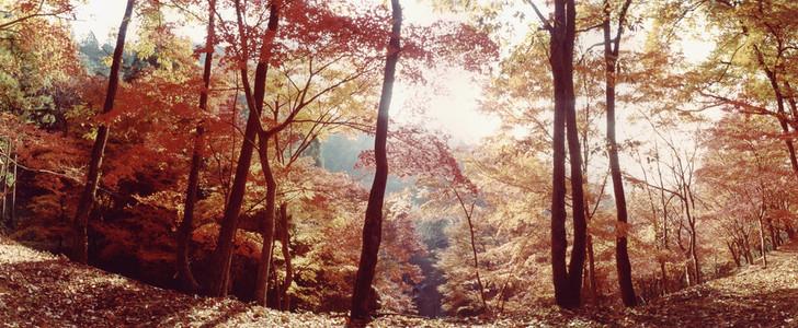 Nature Experiences 04