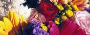 Bloom  02
