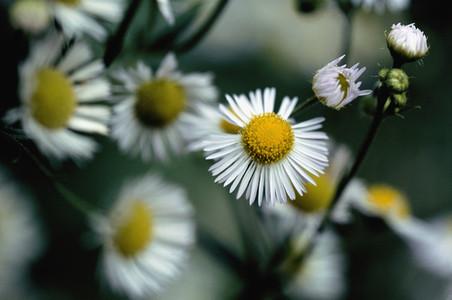 Bloom 03