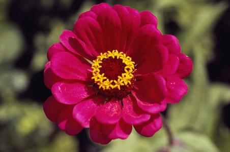 Bloom 04