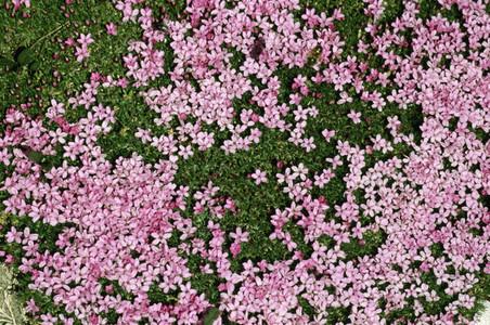 Bloom 05