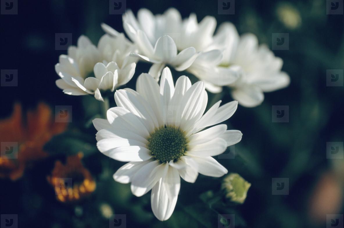 Bloom  08