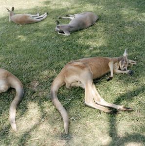 Mostly Australia 14