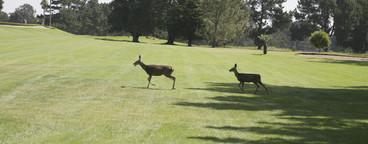 Golf is Good  13