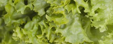 Food Textures  05