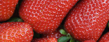 Food Textures  21