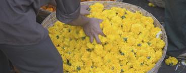 Flowered  06