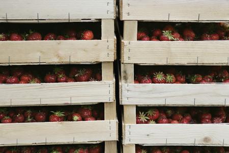 Organic Market 08