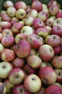 Organic Market 27