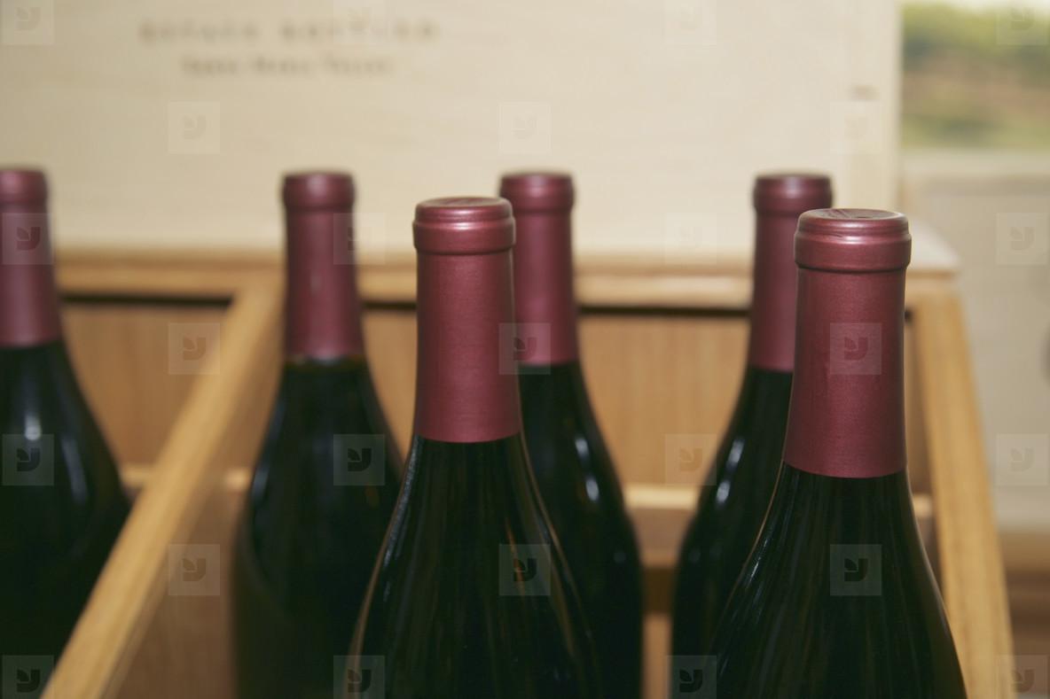 At the Vineyard  01