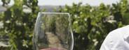 At the Vineyard  02