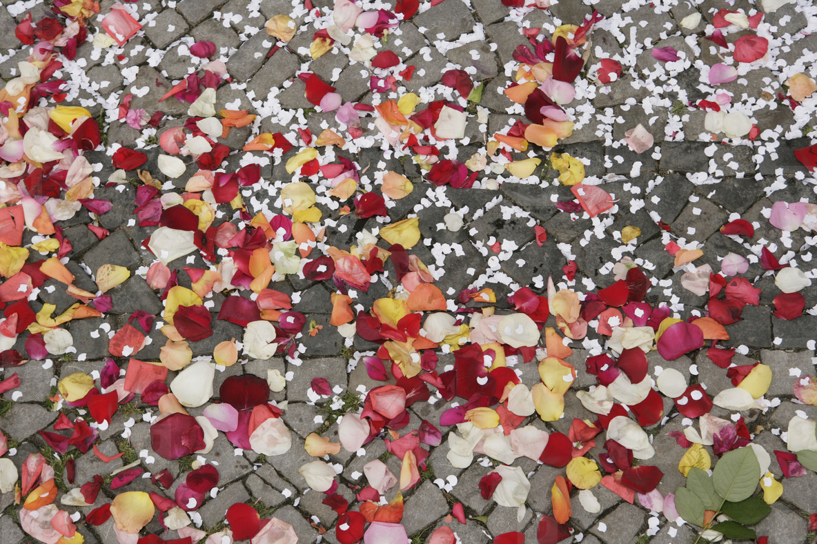 Petals and People  02