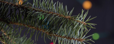 Christmas Stills  10