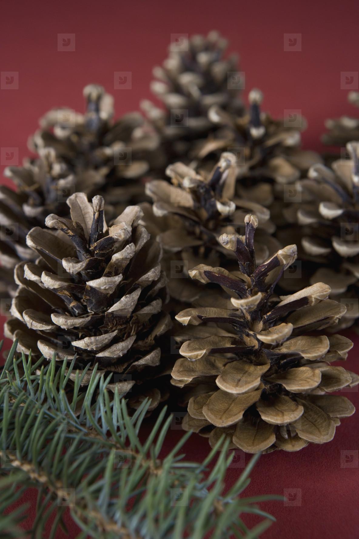 Christmas Stills  26
