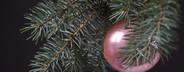 Christmas Stills  33