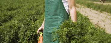 Organic Farming  01