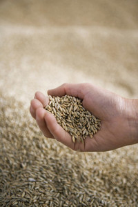 Organic Farming 03