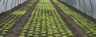 Organic Farming  11