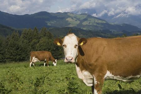 Organic Farming 15