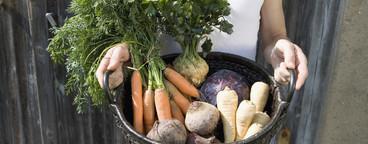 Organic Farming  19