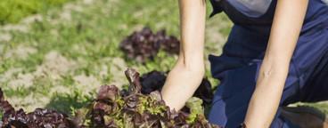 Organic Farming  22