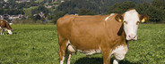 Organic Farming  28