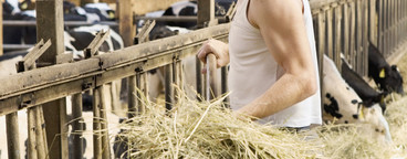 Organic Farming  35