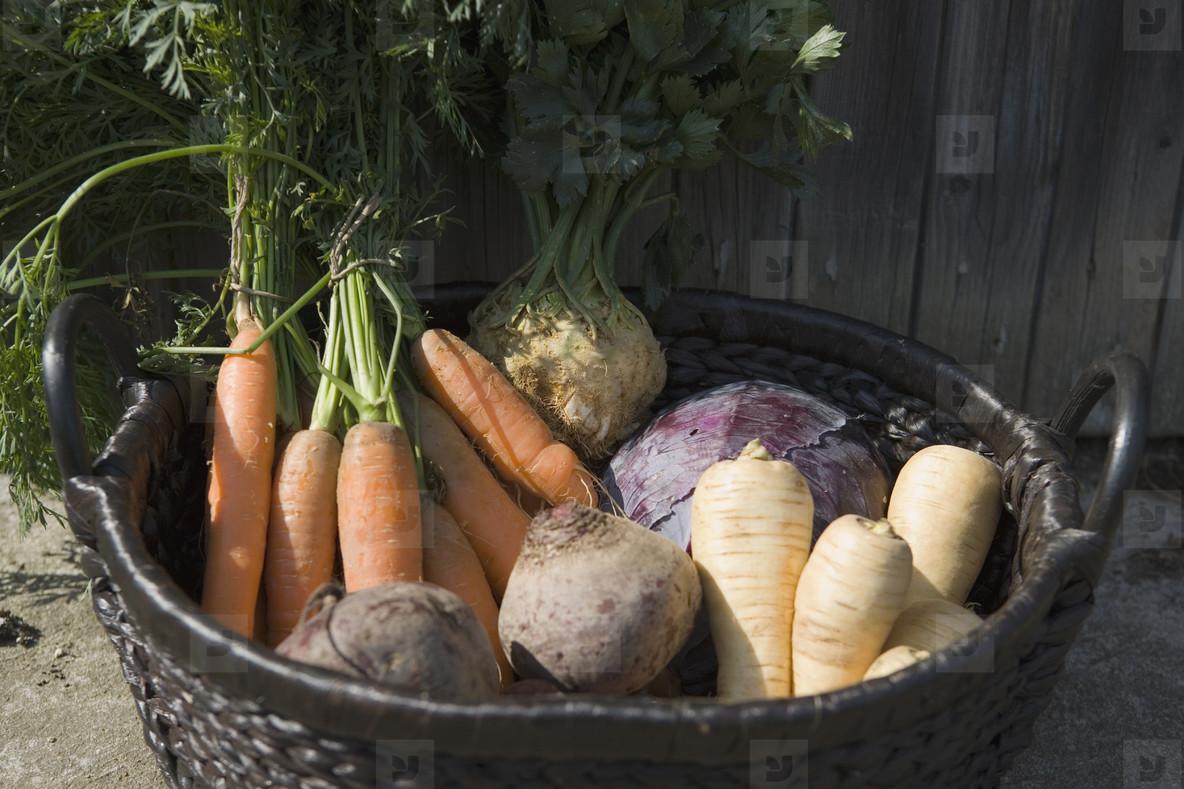 Organic Farming  36