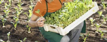 Organic Farming  38