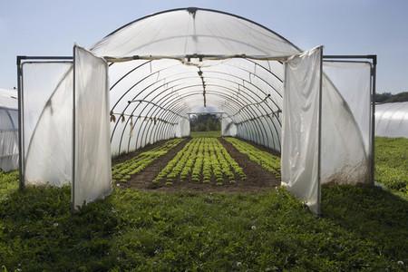 Organic Farming  39