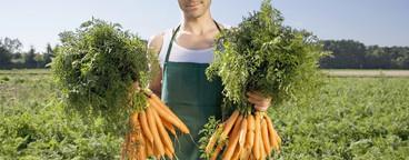 Organic Farming  40