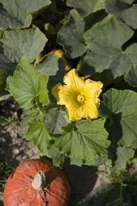 Organic Farming 41