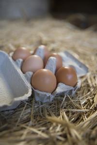 Organic Farming 44