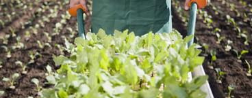 Organic Farming  47