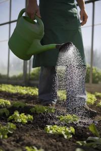Organic Farming  49