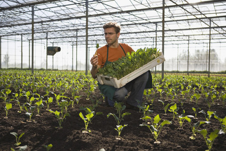 Organic Farming  51