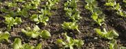Organic Farming  52