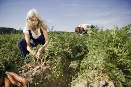 Organic Farming 59